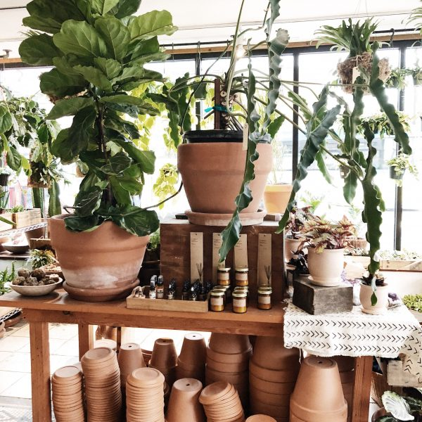 Taking Root: Top 7 Unkillable Houseplants for Beginners